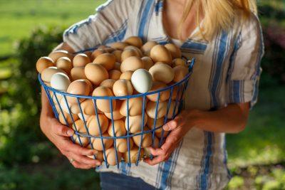 Woman holding large basket of fresh eggs Family Farm