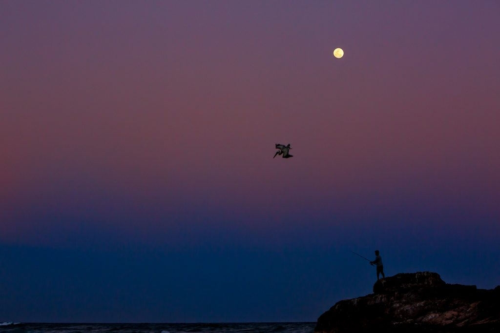 Fisherman with pelican diving into ocean at sunset in Mayatulum Mexico